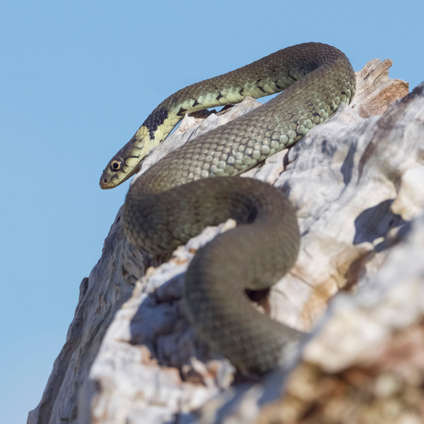 Robert Page Photography snakes